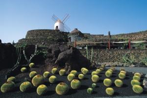 jardín de los cactus lanzarote